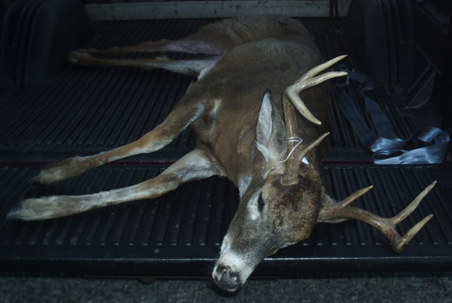 2003 Hunting Whitetail Deer with Winchester Model 9410 and 410 slugs